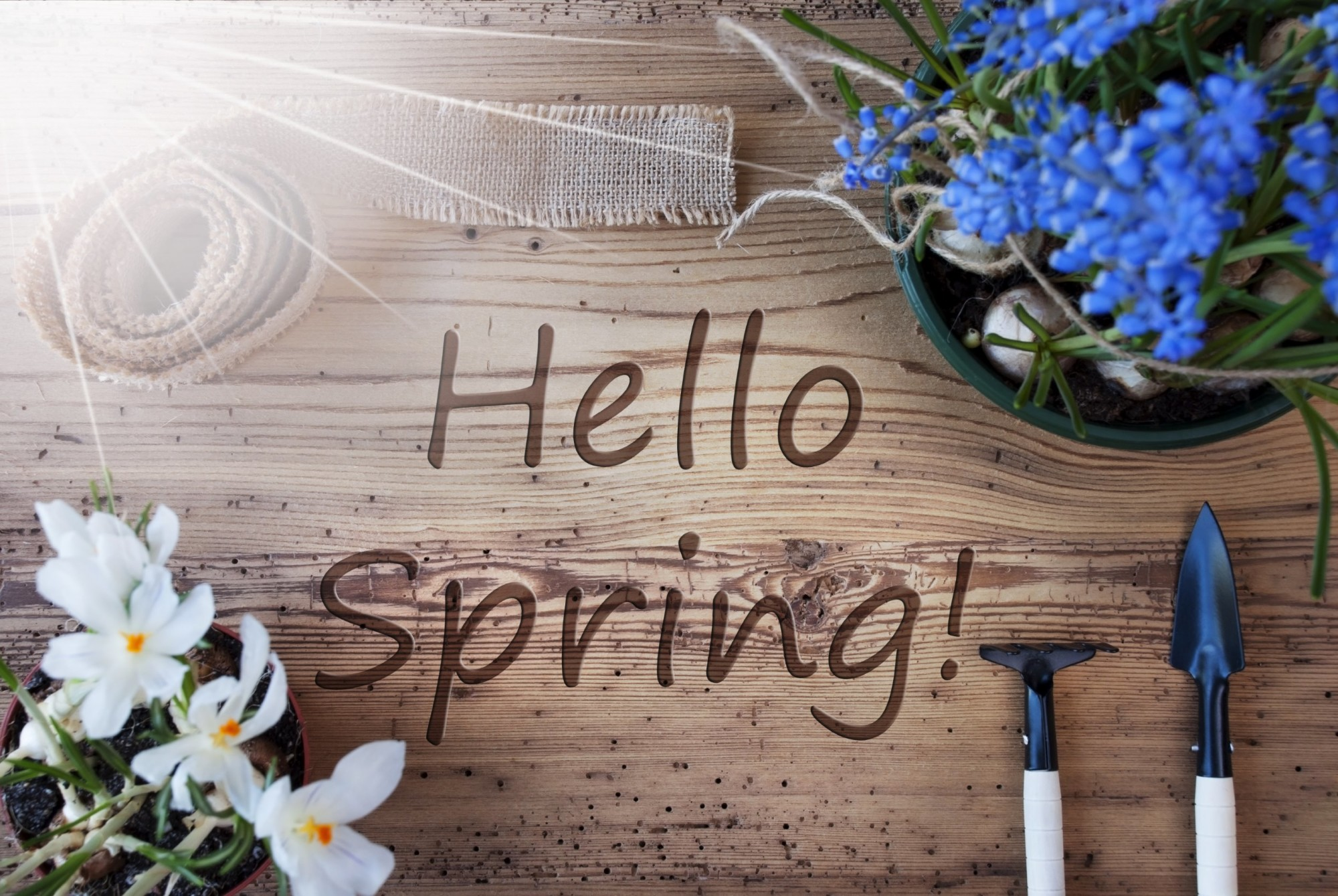spring, new season, fresh beginnings, growth